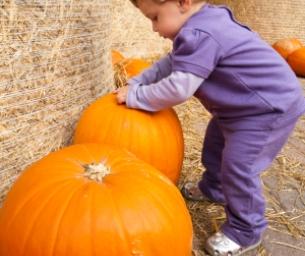 Pumpkin Pickin' Time