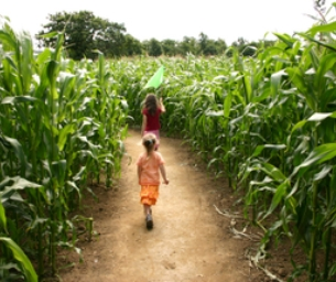 Fall Family Fun: Corn Mazes