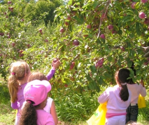 Apple Picking Farms in Connecticut!