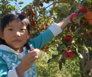 What to Expect when Apple Picking at an Orchard