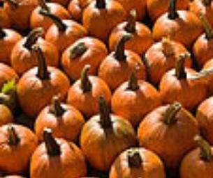Fall Fun - Pumpkin Patches and Corn Mazes