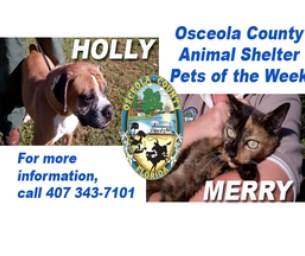 Macaroni Kid Cares Osceola County Pets of the Week