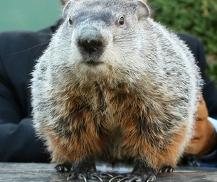Groundhog's Day is Thursday February 2, 2012