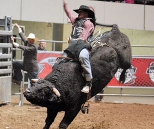 Bull Riding's BEST are headed to Hampton Roads!