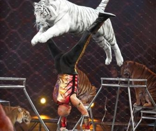 Ringling Bros.and Barnum & Bailey® Fully Charged