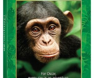 WIN IT! CHIMPANZEE on Blu-Ray / DVD!