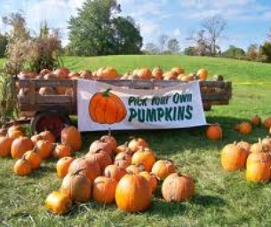 Pumpkin Patches & Festivals