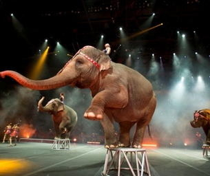 Ringling Bros. and Barnum Bailey Circus