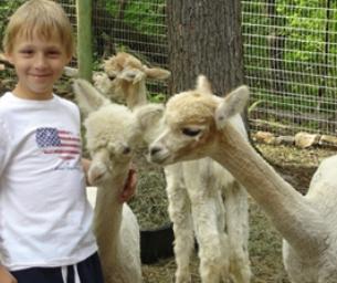 Visit an Alpaca Farm!