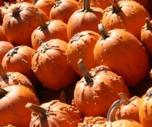 Pumpkins, Hayrides, Corn Mazes...oh my!!