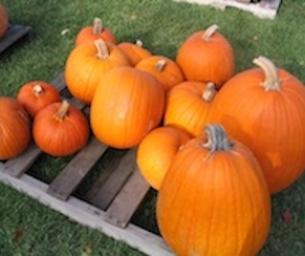 6 Tips to Cut Halloween Spending in Half