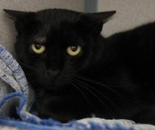 Featured Pet: Bashful Likes Playing With Toys