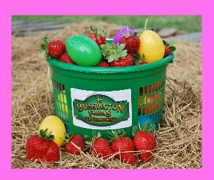 Hunt for Eggs and Pick Strawberries at Blessington Farms