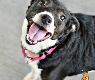Meet Poppy ~ Our RVSPCA Pet of the Week