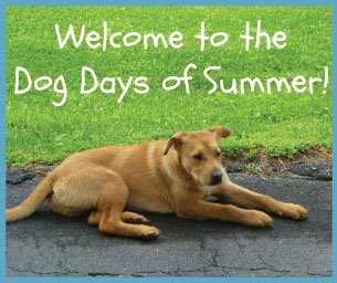Welcome to the Dog Days of Summer!