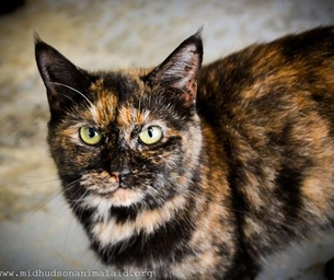 Featured Pet: Leela is looking for a Home for the Holidays