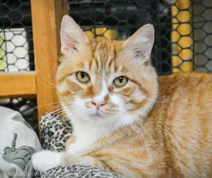 Featured Pet:  Redford Is Looking For A Home For The Holidays