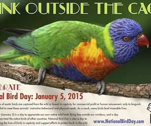 National Bird Day is January 5th
