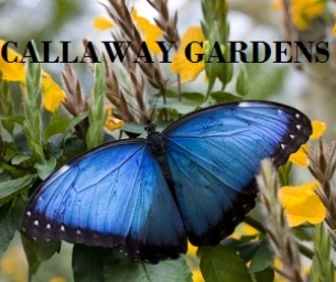 FREE ADMISSION AT CALLAWAY GARDENS THIS WINTER!!