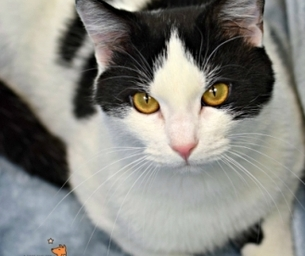Meet Tolstoy ~ Our RVSPCA Pet of the Week