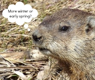 A QUICK HISTORY OF GROUNDHOG DAY