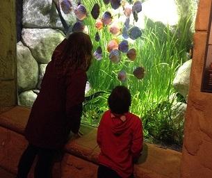 Staycation Destination - The Long Island Aquarium & Exhibition Center