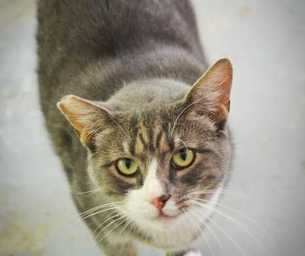Featured Pet:  Jennifer is looking for Her Forever Home for 2015
