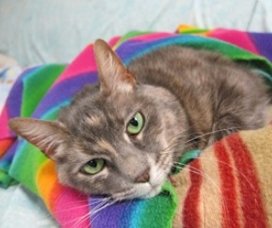 PET OF THE WEEK: Sheba