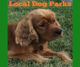 Local Bark Parks
