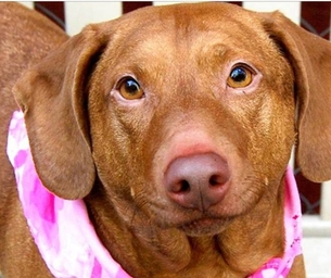 Shelter Pet of the Week - Come Meet Ella
