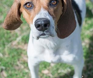 Meet Penny ~ Our RVSPCA Pet of the Week