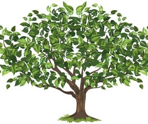 Beginner Genealogy Class at Norwood Public Library March 30