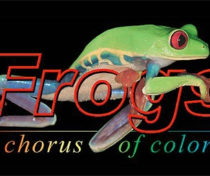 Exotic frogs exhibit NOW OPEN at the Virginia Living Museum
