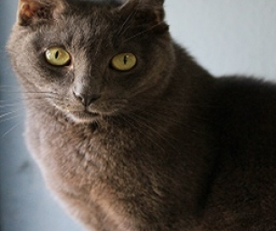 Featured Pet: Ricky is looking for His Forever Home