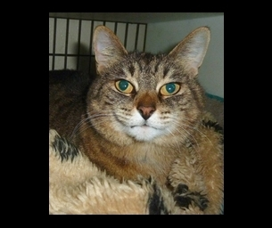 Featured Pet: Boots is Beautiful