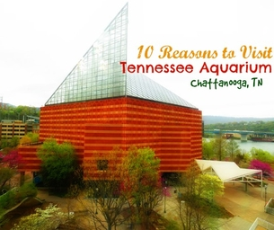 10 Reasons to Visit the Tennessee Aquarium!