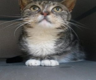 Featured Pet: Marceline