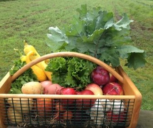 Green Meadows CSA shares available now!