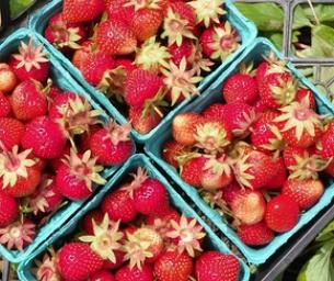 Strawberry Picking Season - Coming Soon!