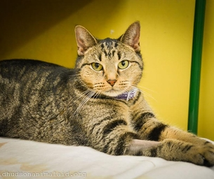 Featured Pet:  Lexie is looking for Her Forever Home