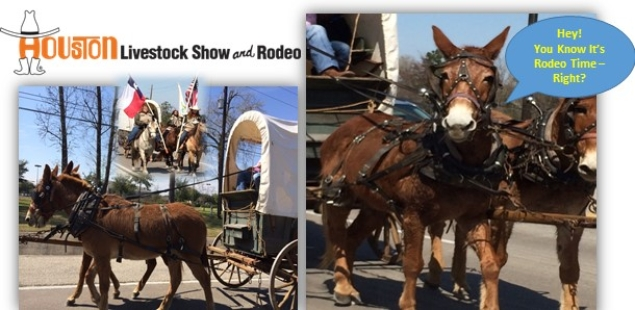 This Week's Highlights - Houston Livestock Show & Rodeo Starts This Month