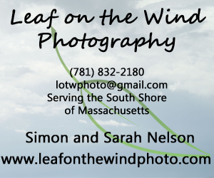 Leaf on the Wind Photography