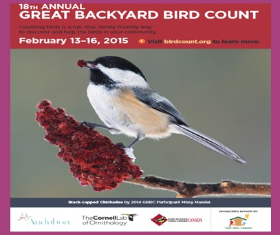 birds by counting them for the great backyard bird count gbbc the